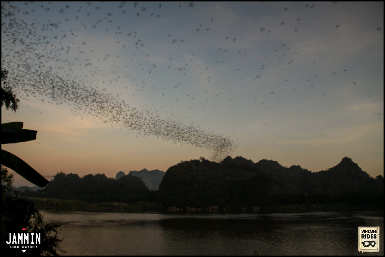 Bats in Hpa'an