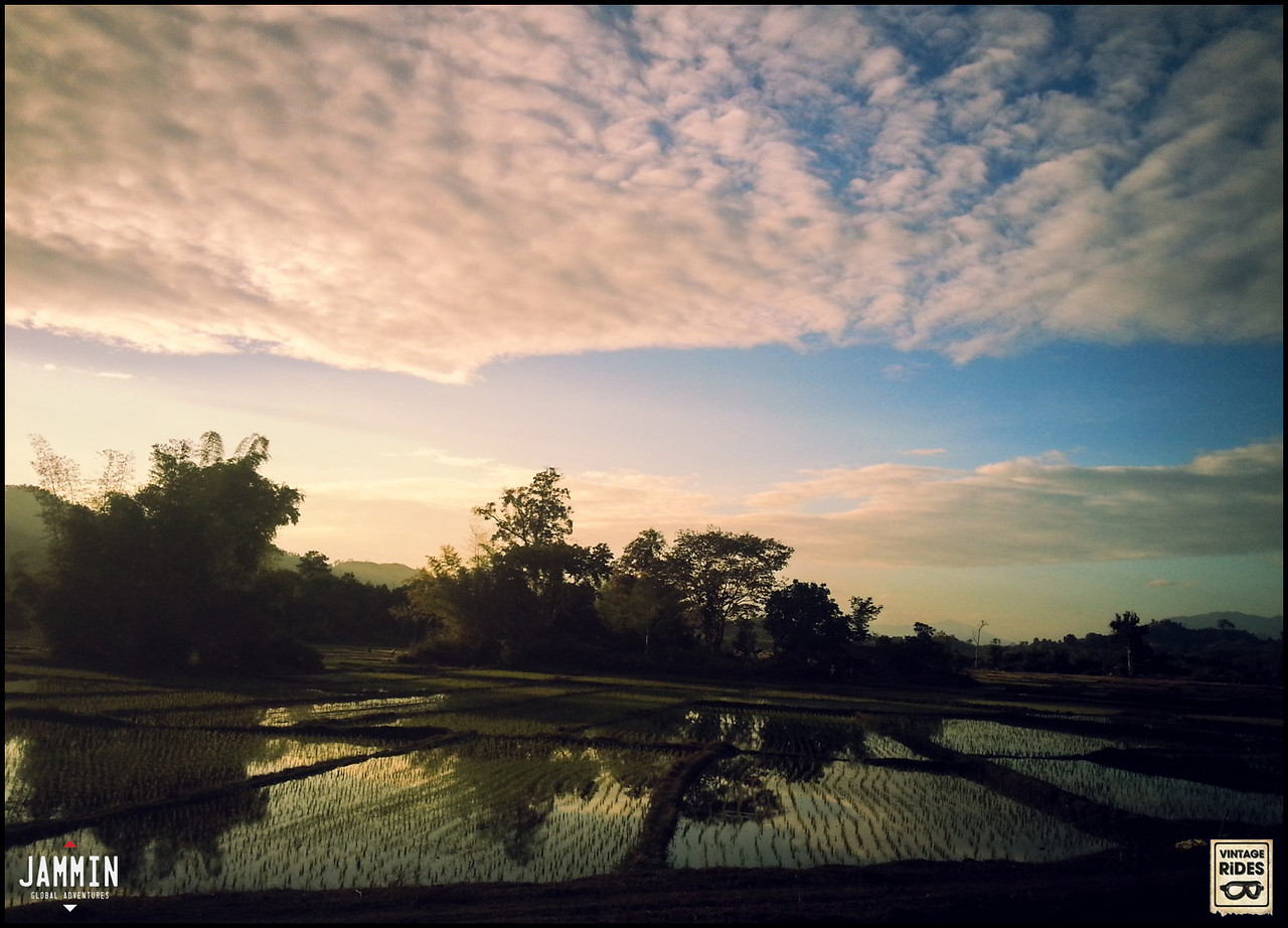 Paddy fields of Laos