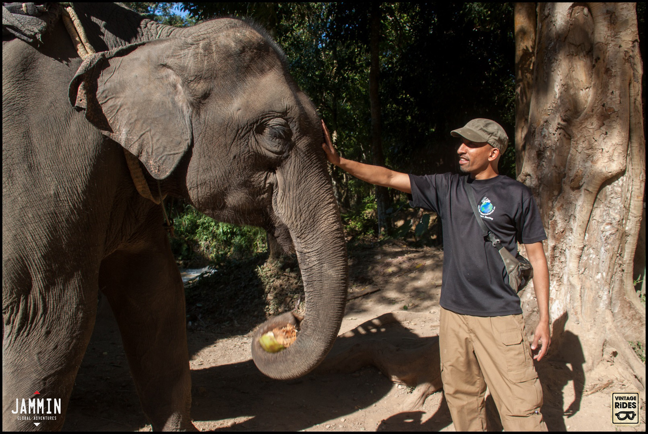 Touching elephants in Laos